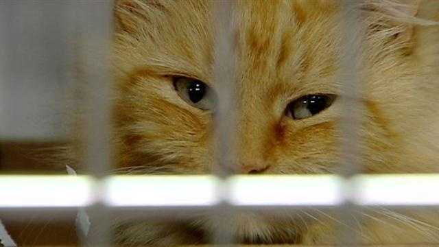 Pet care may get more expensive under proposed bill