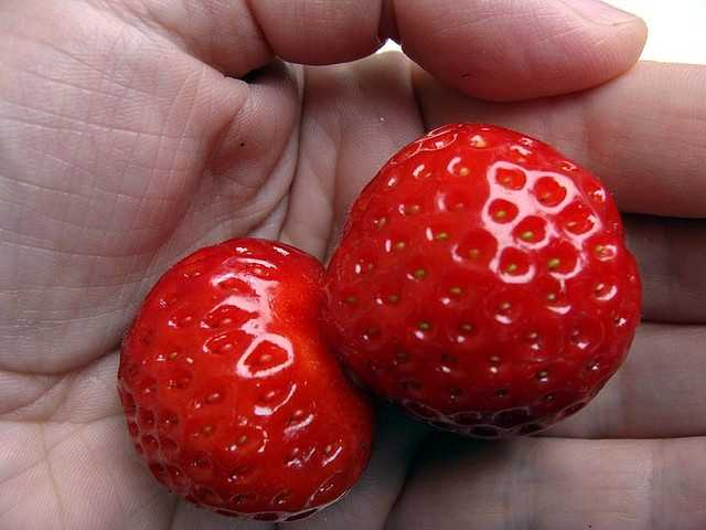Strawberries aren't true berries, like blueberries or even grapes. Technically, a berry has its seeds on the inside.