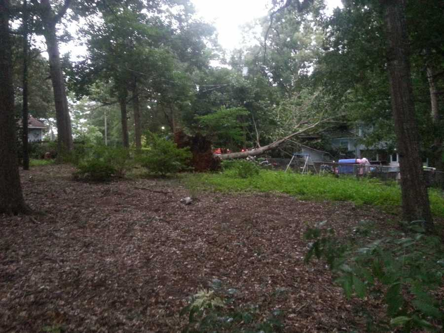 This tree downed on Chuchwood Drive knocked out power to the area in Simpsonville.