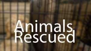 generic puppy mill Animals Rescued