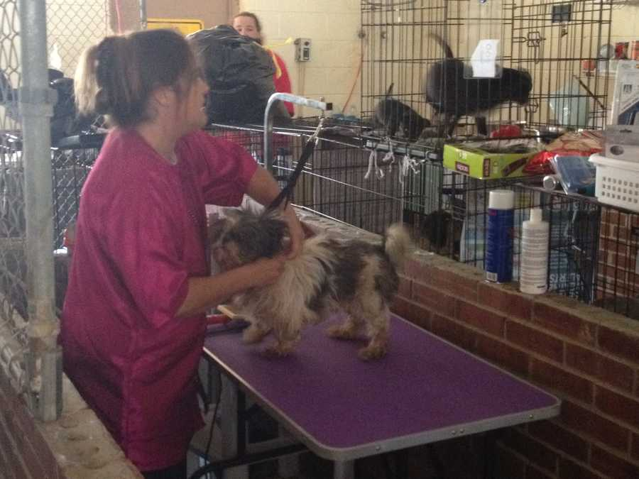 Click through to see pictures of the animals rescued from an Upstate puppy mill.