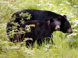 A group of 7 Upstate hunters were arrested this week and charged with a list of wildlife violations, including killing a mother bear with her cubs. Click through to see those who were arrested. (FULL STORY)