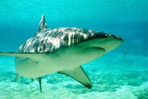 Check out the number of shark attacks in the Continental United States from the 1800s through 2012, according to the Florida Museum of Natural History. You may be surprised where South Carolina falls in the list.