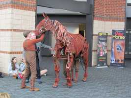 Joey is just under 10 feet long and about 8 feet tall, has about 20 major joints. Vertical levers curl the knees and lift the hooves.