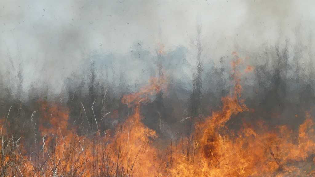 generic wild fire brush fire