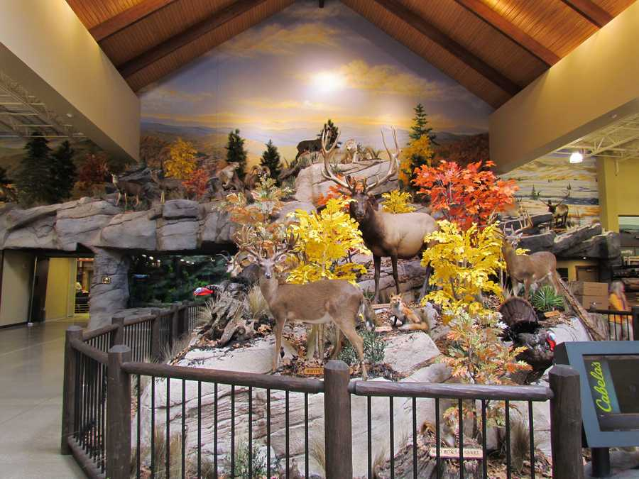 The huge mountain display in the center/back of the store is a signature piece in all Cabela's stores.