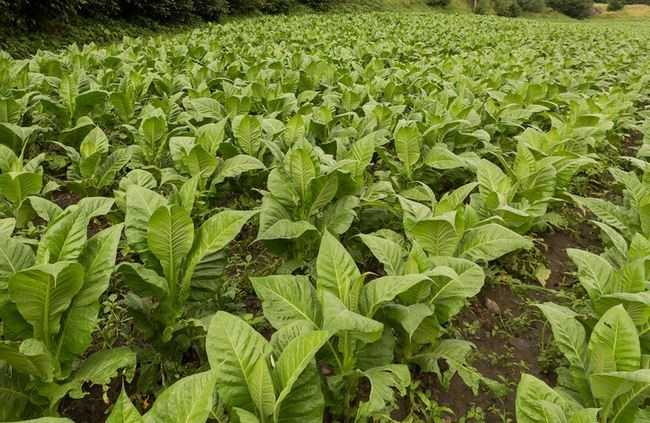 SC's major industries are farming (tobacco, soybeans), textiles, manufacturing chemicals, processed foods, machinery, electronics, paper products and tourism.