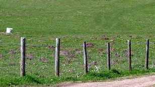 cow-shot.jpg
