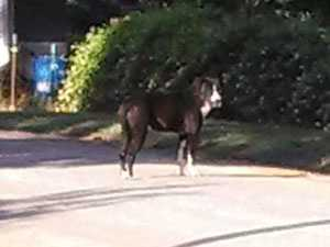 On Monday Piper was spotted without the pipe on his head and Oconee County Animal Control officers set traps to try and capture him so he could get the care he needed.