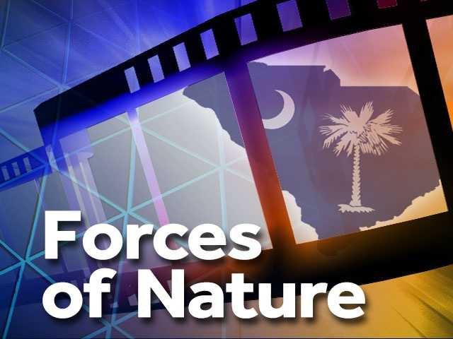 """Forces of Nature (1999) -- Beaufort, Dillon. This romantic comedy featured Academy Award winners Ben Affleck and Sandra Bullock. Affleck played a soon-to-be married blurb writer who meets a free-spirited woman (Bullock) on a flight. """"Forces of Nature"""" went largely unnoticed in the box office, but occasionally finds an audience on cable television."""