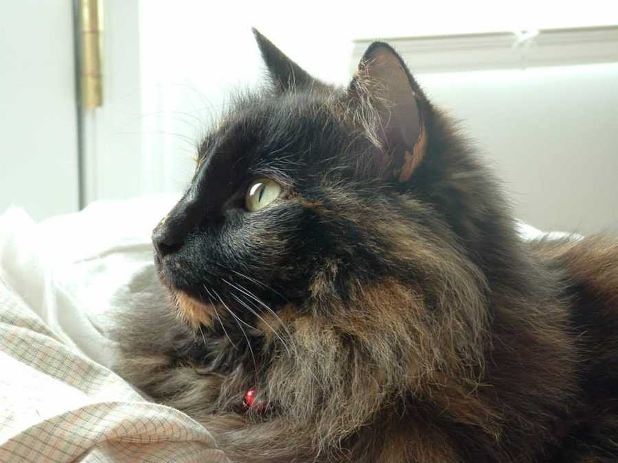 Mandy loves animals. Her all-time favorite feline, Oscar, (who was female) died one year ago. Oscar was 18-years-old.
