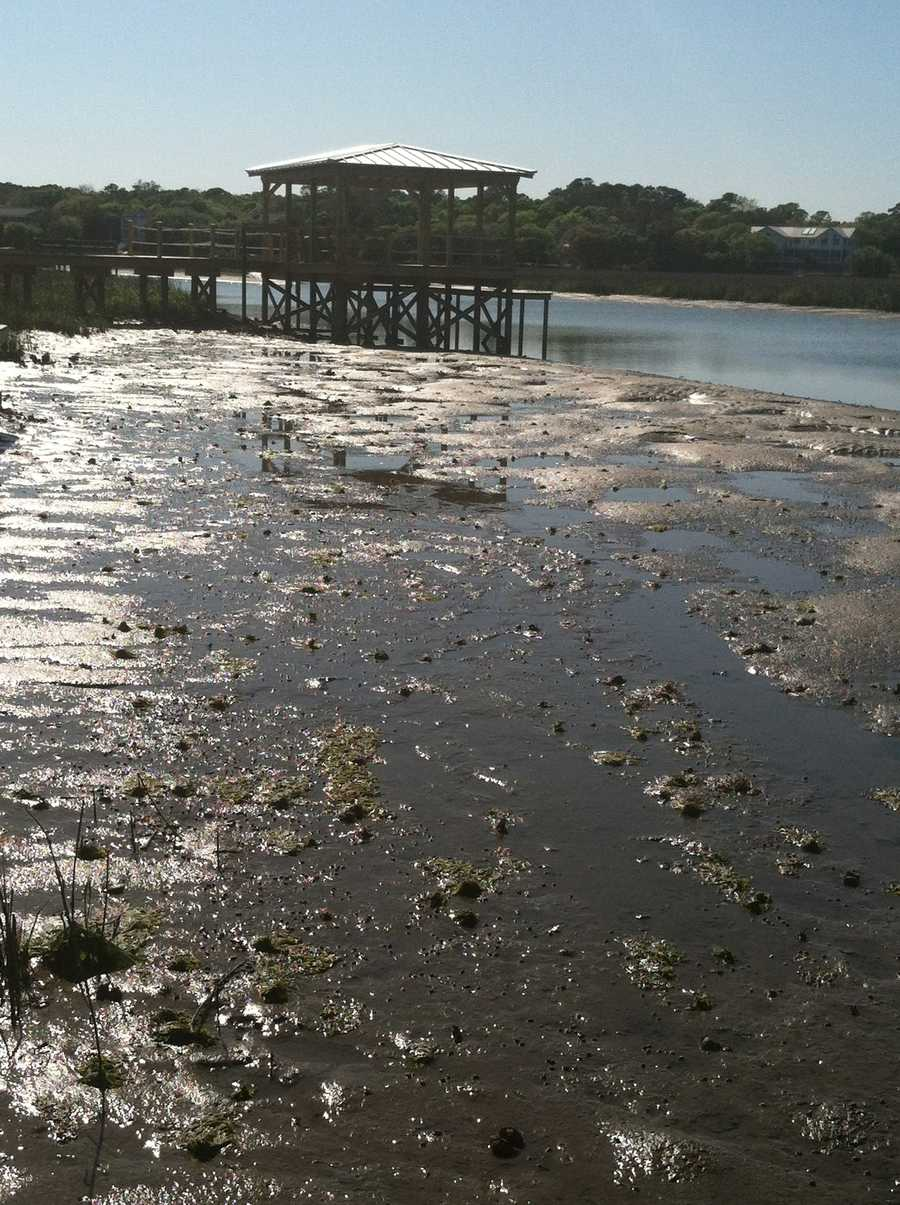 And plough mud. (even the smell)Pawleys Island, SC is one of her favorite places to play in the mud.