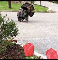 Pamela lives in Asheville and starts most days being greeted by the wild turkeys in her neighborhood.