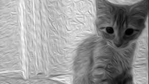 kitten generic art graphic