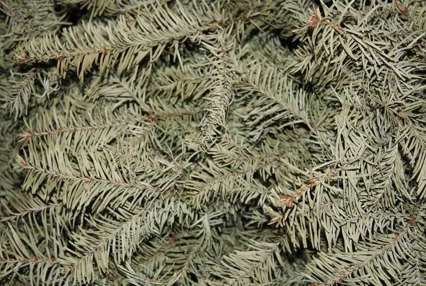 Get rid real Christmas trees when needles start dropping. It means it's too dry to be safe.