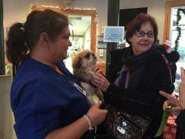 This Greenville County Animal Care visitor is contemplating adopting a pekingese.