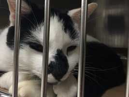 About two dozen of the cats have had their fees waived.