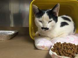 Greenville County Animal Care is open until 7 p.m. on Christmas Eve.