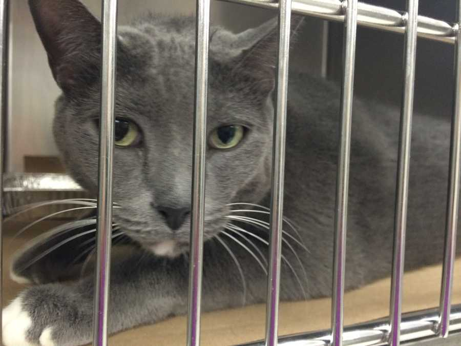 Jasper is available to go home today.