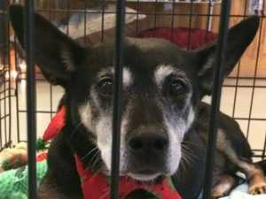 There are pets patiently waiting to be adopted into forever homes for the holidays, and some of them can be taken home for free.