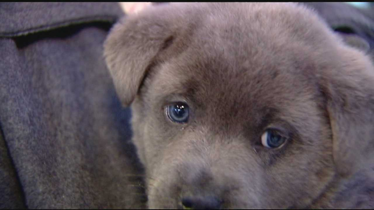 Upstate animal shelter seeks homes for animals