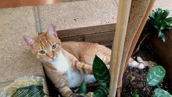 A cat that went missing in Anderson two years ago has been found after ending up nearly 2,000 miles away. Read more here.