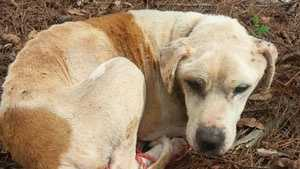 The Humane Society of Cherokee County is offering a $5,000 reward for information after a dog was found hogtied and left to die, according to the groups Facebook page. Click HERE to read more.