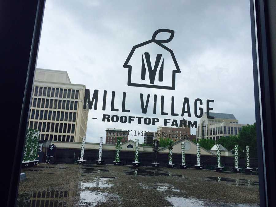 Downtown Rooftop Garden #2