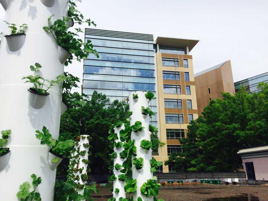 Downtown Rooftop Garden #3