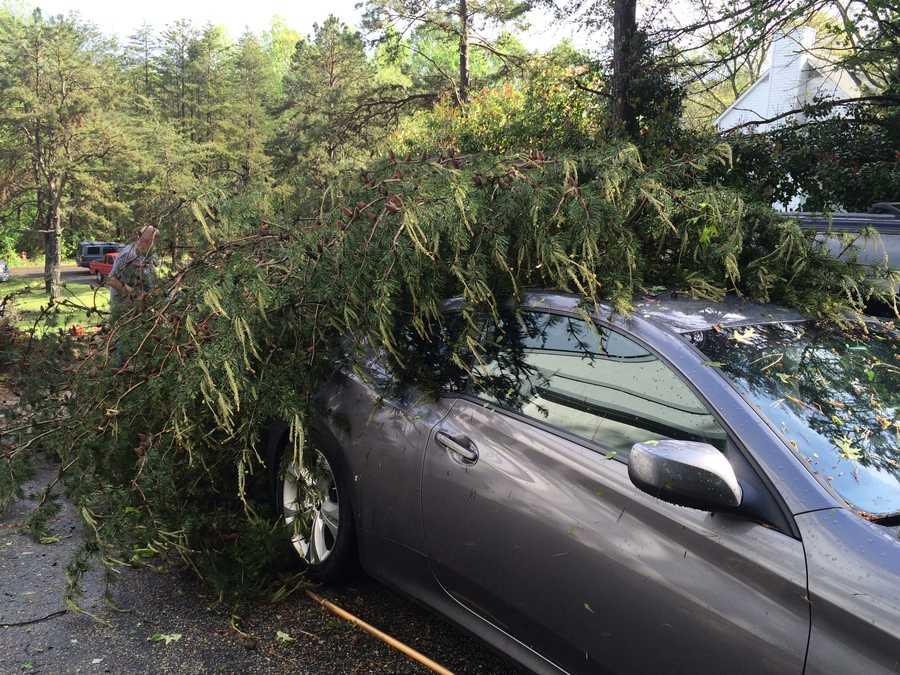 Shadow Lane tree down on car
