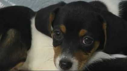 Stolen Georgia puppies returned