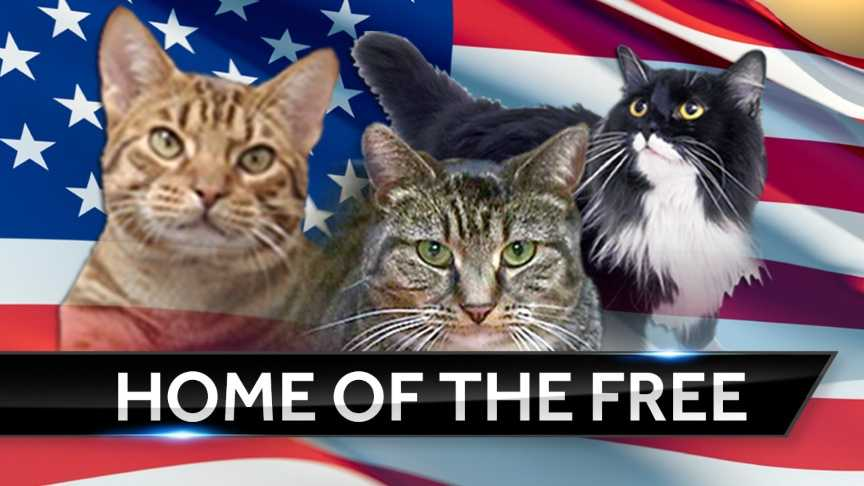 Greenville County Animal Care holds 'Home of the Free' event.