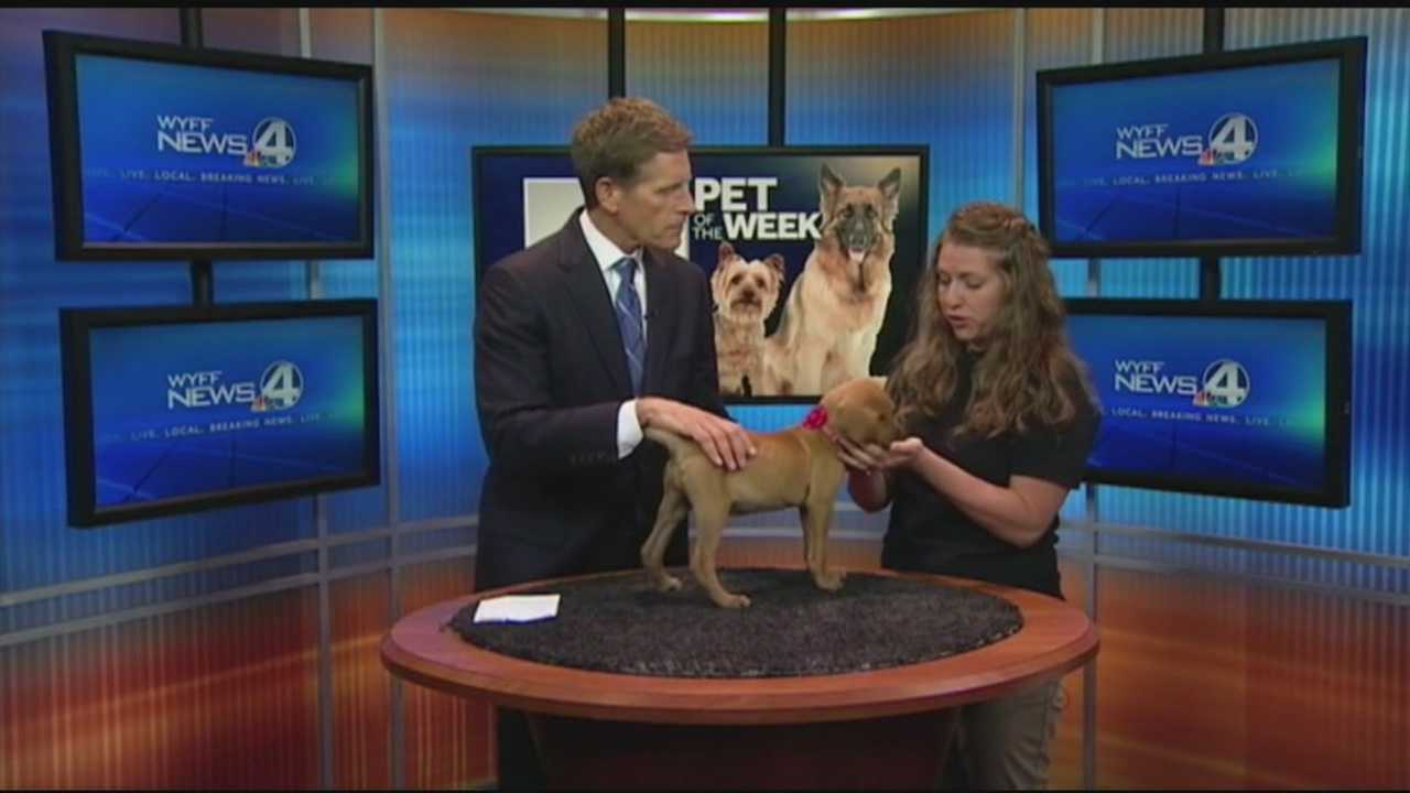 Foster program focuses on animals in need