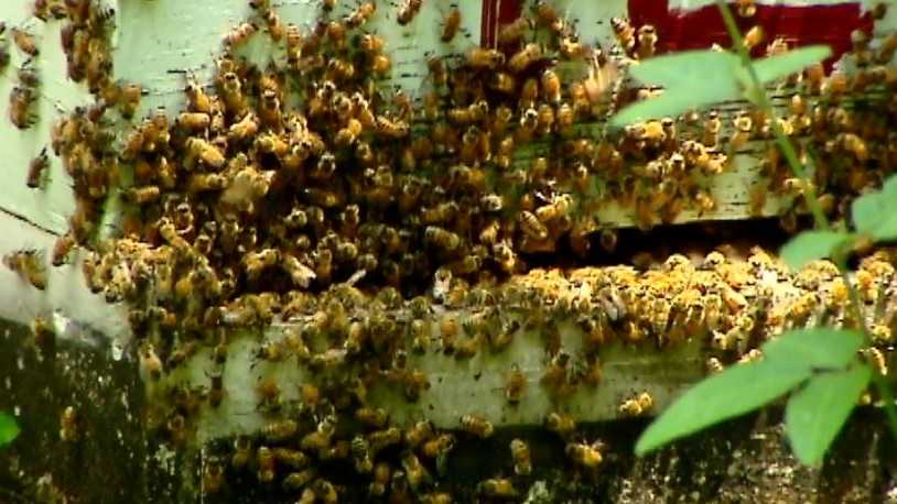 Doug Hogg's hives are still abuzz after almost 40 years.