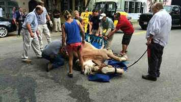 A carriage horse that became spooked and fellon East Bay Street is now back up on its feet.