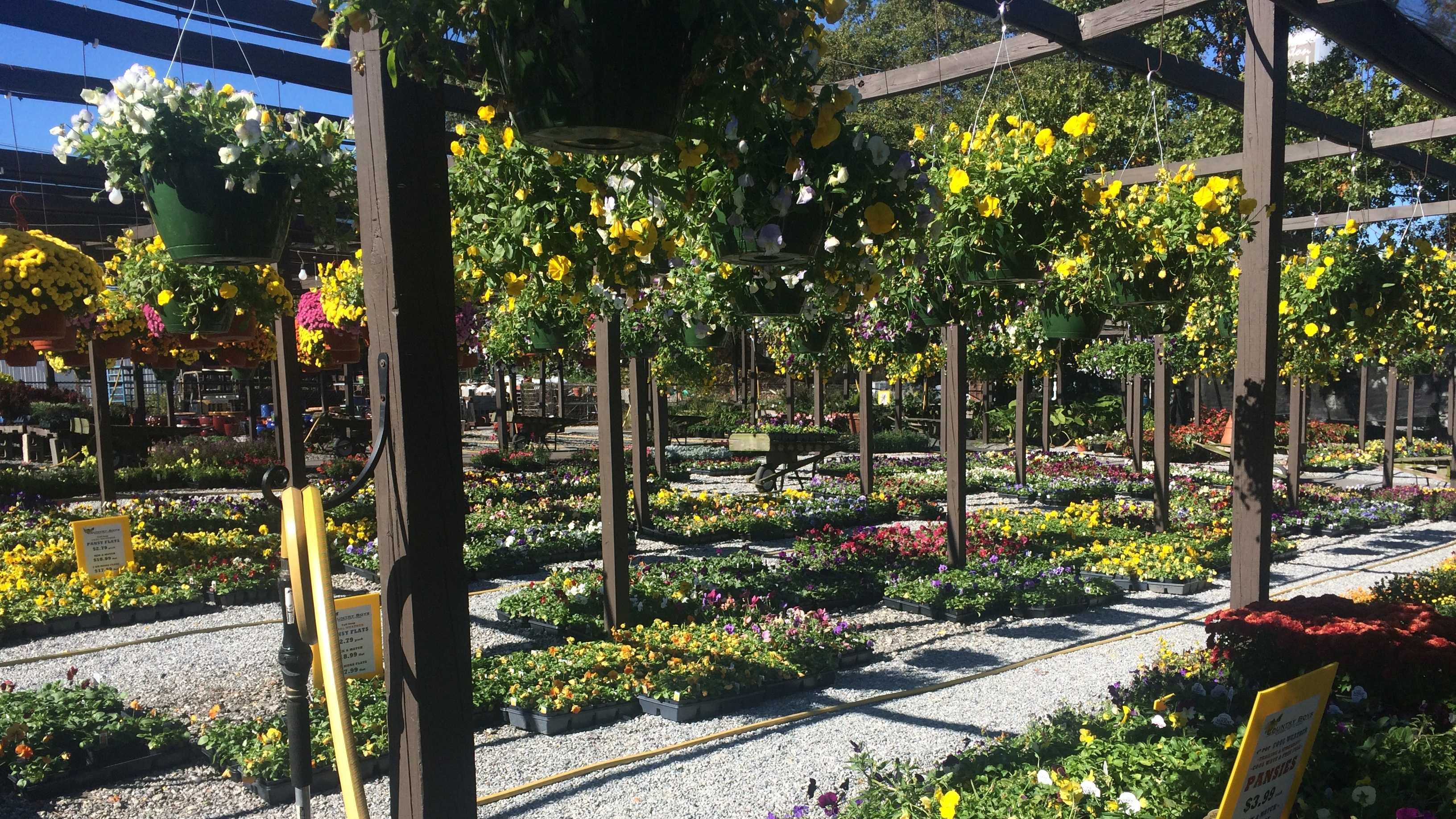 At Country Boys in Greenville, the nursery is stocked with plants for fall and weather temperatures.