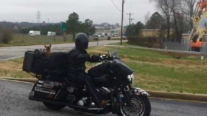 Adam Sandoval and his dog are riding across the country on their motorcycle to raise money for military families.