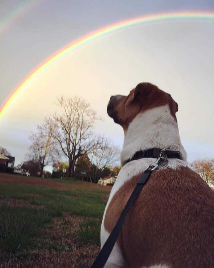 Credit: Neil Turner and his dog Ravi