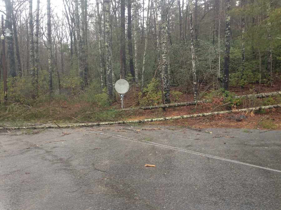 Camp McCall tree down - near Sunset in Pickens CountyFrom Randy Cramer