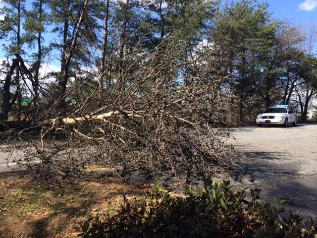 Villa Road wind damage, Greenville