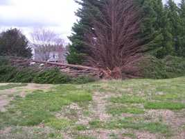 Tree down in Easley, from Ulocal user noz4nuzAbout 4:30 this afternoon, my husband heard a cracking sound. We looked out our back windows and saw our neighbor's tree come down on top of our fence.