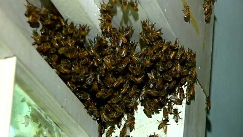 More than one million honeybees are being evicted from a Marietta home.