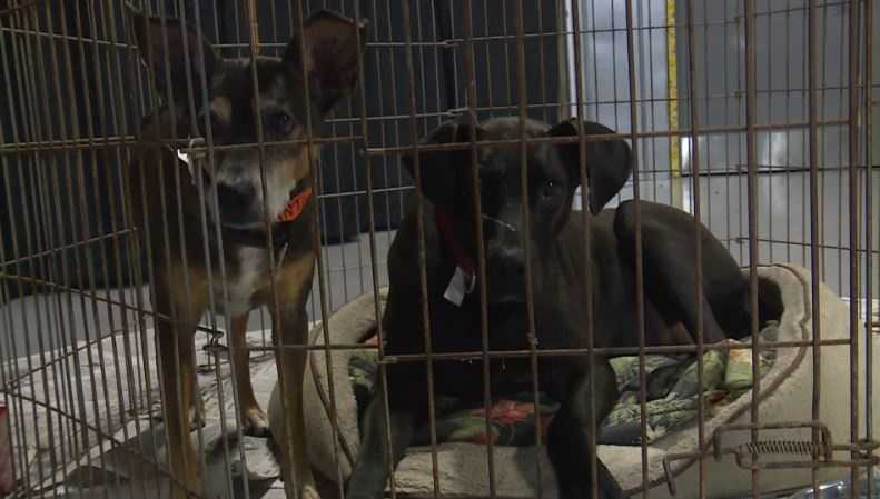 Pets in Spartanburg Expo Center shelter