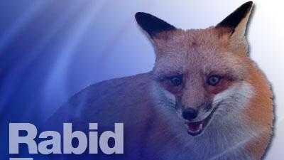 art graphic: Rabid Fox - 16653668