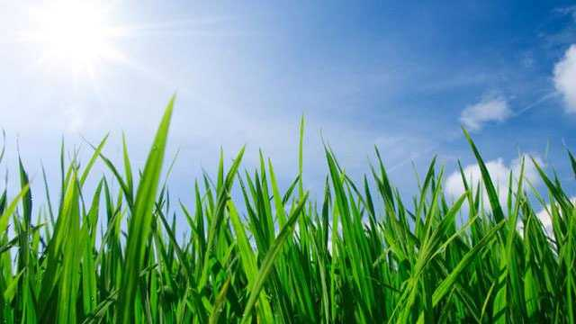 Green grass lawn with blue sky