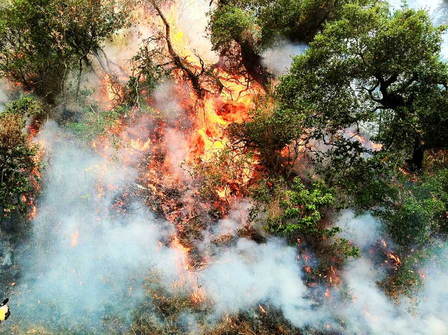 The Pfeiffer Fire scorched 769 acres, destroyed 22 homes in Big Sur, and was 74 percent contained Wednesday.