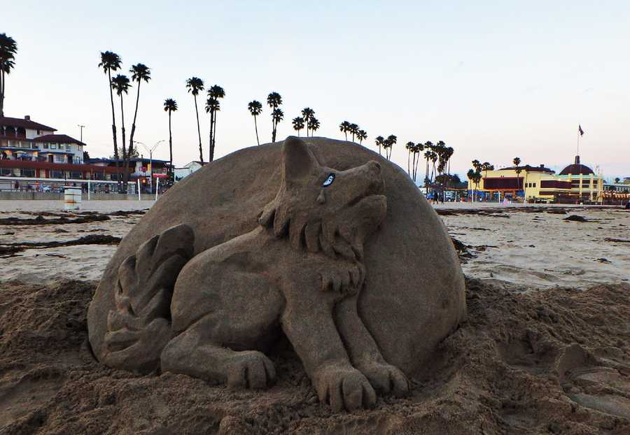 As a tribute to Madyson, a wolf sand sculpture was made for her on Main Beach July 31. Her mother invited Santa Cruzans to howl at the full blue moon because Madyson loved wolves.