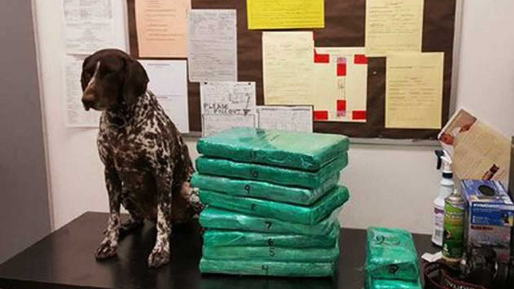 Cocaine is stacked next to a dog.