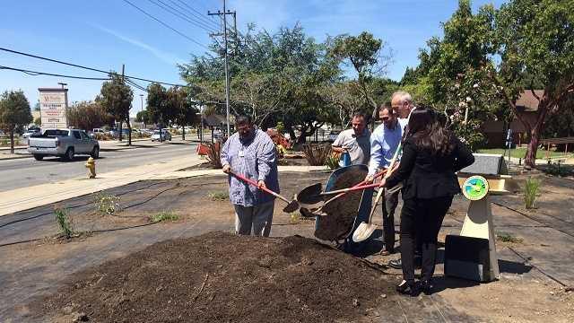 Santa Cruz officials replace turf with drought-tolerant plants