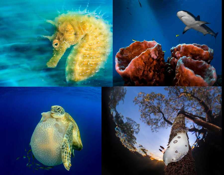 2016 Underwater Photographer of the Year Contest winners: